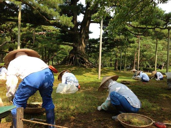 Kenrokuen Garden: 暑い中、草取りごくろうさまです。