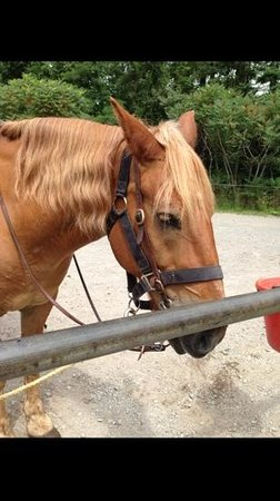 Mountain Creek Riding Stables: My horse Pedro