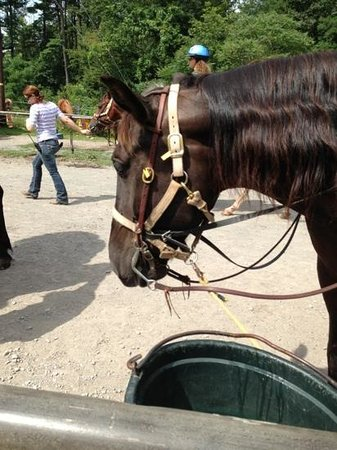 Mountain Creek Riding Stables: Sarge