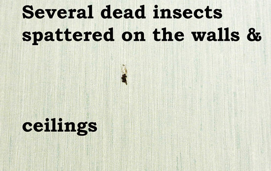 Kentucky Dam Village State Park: dead splattered insects on wall and ceiling