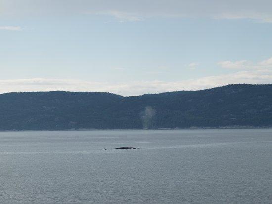 Aux Portes du Soleil: Blue whale in St. Lawrence