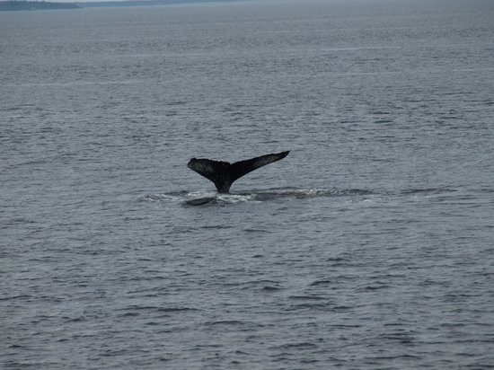 Aux Portes du Soleil: Humpback in Baie St. Catherine