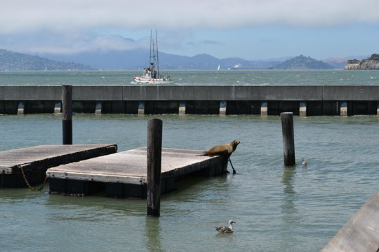 how to get to golden gate bridge from pier 39