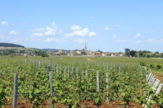 Bourgogne Evasion : Mersault