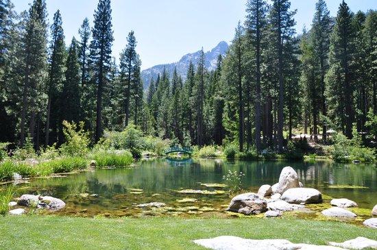 Big Springs Gardens: Big Springs Garden pond