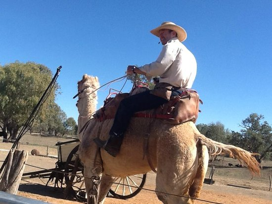 Bourke, ออสเตรเลีย: Outback show - riding a camel