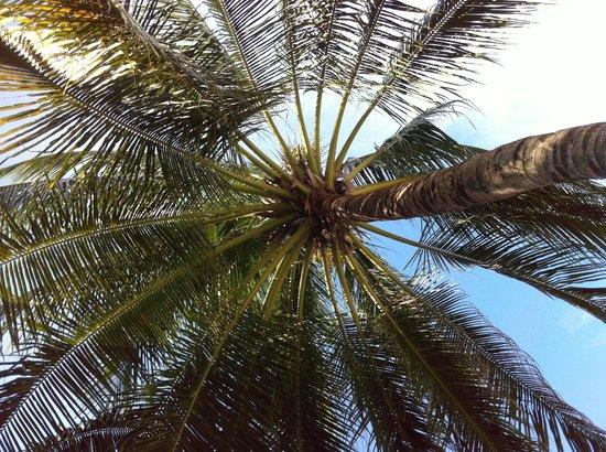 Bintan Agro Beach Resort: Pretty resort