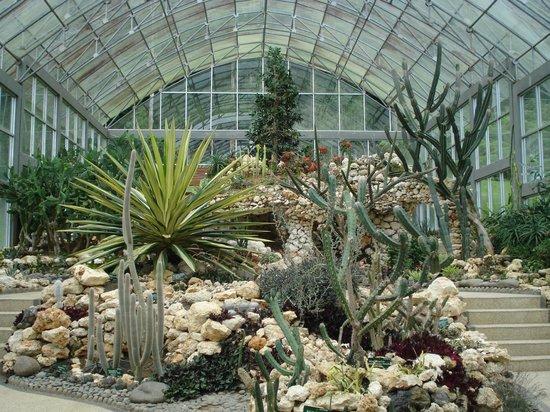 Indoor Cactus Garden Cactus green house picture of bali botanic garden tabanan bali botanic garden cactus green house workwithnaturefo