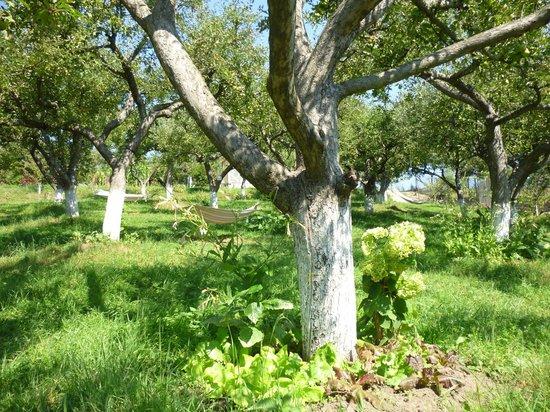 Hilde's Residence: Pommiers du jardin et hammacs