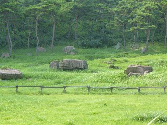 Gochang, Hwasun, and Ganghwa Dolmen Sites : dolmens