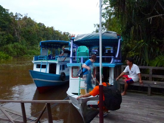 Rimba Orangutan Eco Lodge: Arrival by Klotok river boat at Rimba Lodge