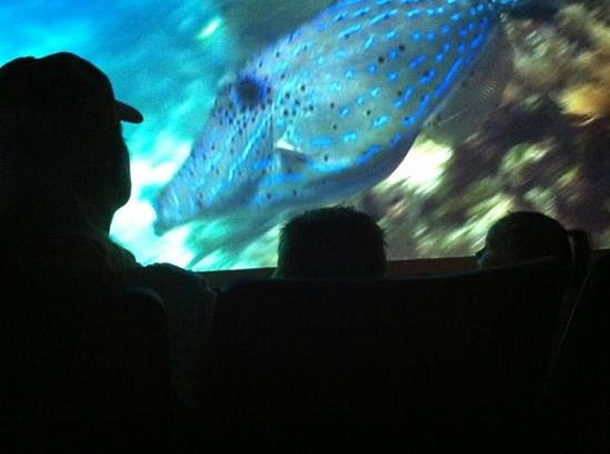 Florida Keys Eco-Discovery Center: Both the 3D display & the movie are great!