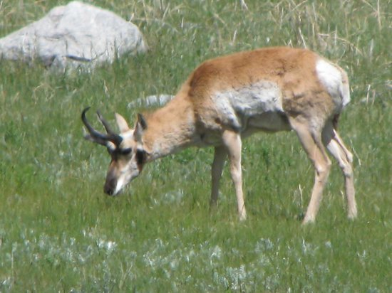 BrushBuck Wildlife Tours: Don't remember name of this animal