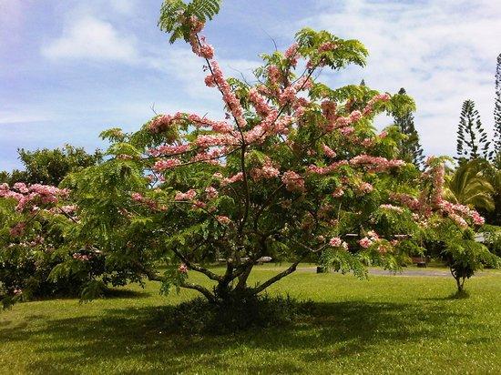 Kalani: graceful nature