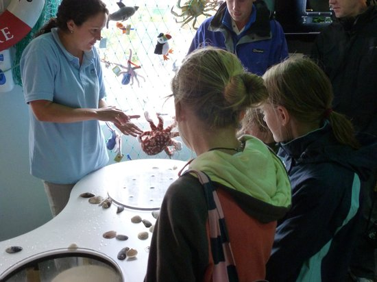 Tobermory Marine Exhibition: Live crabs and starfish..