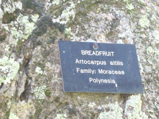 Botanical Gardens: Originated from Polynesia