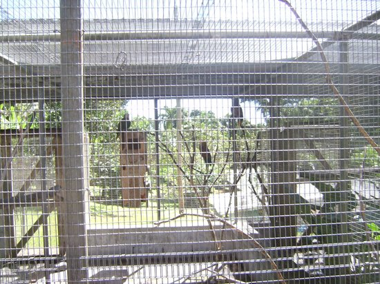 Botanical Gardens: Caged Native Parrot