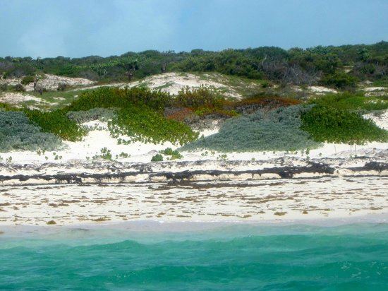 South Caicos: Can you see the Donkey?