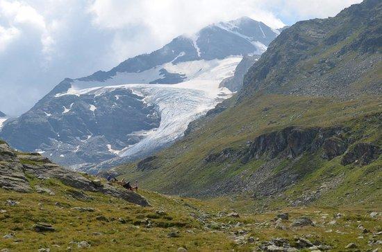 Morteratsch Glacier: Morteratschgletscher