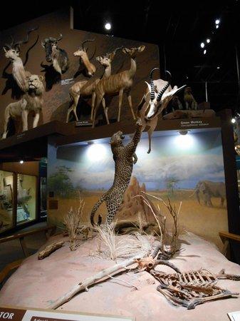 Columbus Oh Natural History Museum