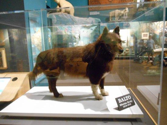 Natural History Of A Siberian Husky