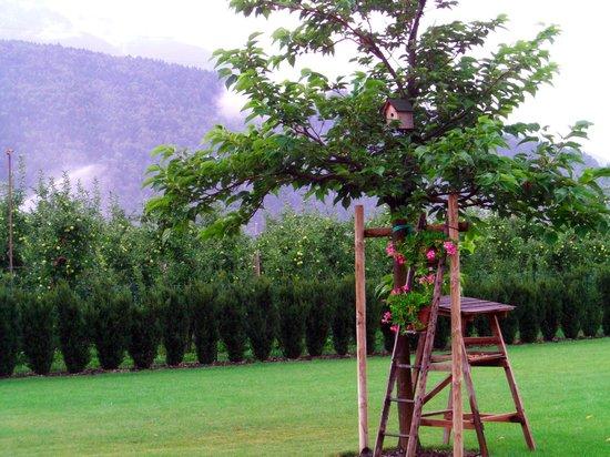 Agriturismo Corte delle Mele: il giardino.