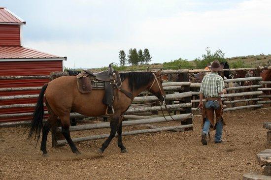 Yellowstone Horses - Eagle Ridge Ranch : Getting ready