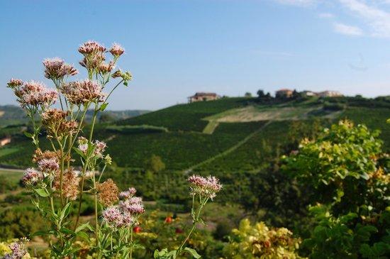Cascina Vrona: view