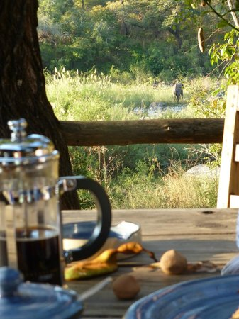 Bua River Lodge: elephants for tea