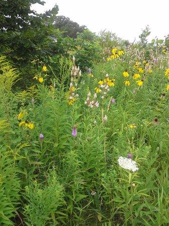 Inn on Woodlake: Wildflowers in bloom ...