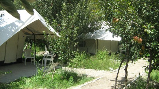 Apple Orchard Farm and Camping : Camp View