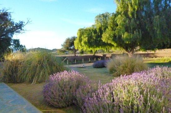 Hacienda de Molinos: Vista hacia la piscina