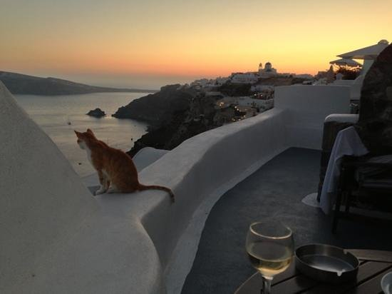 Aspa Villas : a cat came to enjoy the sunset view with us!
