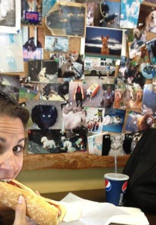 "Dude Dogs: enjoy the""bar"" with so many dog photos!"