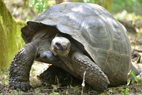 Sharksky Ecoadventures Galapagos: Tortuga