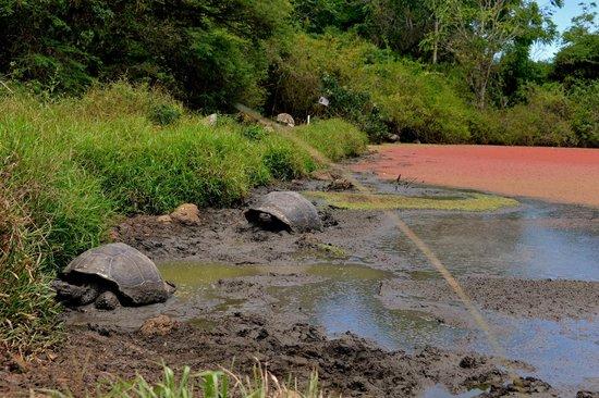 Sharksky Ecoadventures Galapagos: Rancho Manzanillo