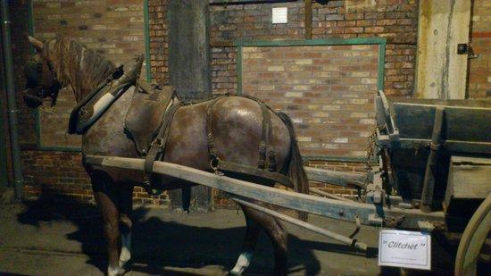 Blegny-Mine: ook paarden in de mijn