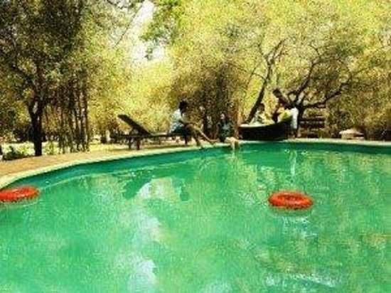Swimming pool picture of casa deep woods masinagudi tripadvisor for Resorts in bandipur with swimming pool