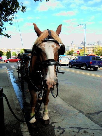 Victoria Carriage Tours: Betty