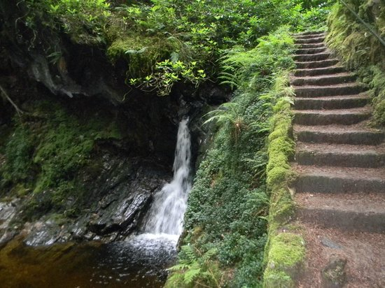 Puck's Glen: water and steps