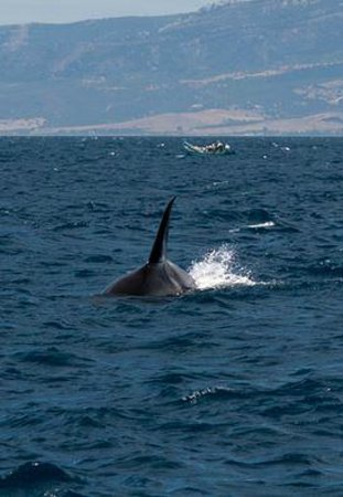 FIRMM Whale Watching: Orca