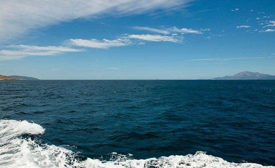 FIRMM Whale Watching : Europa - Afrika