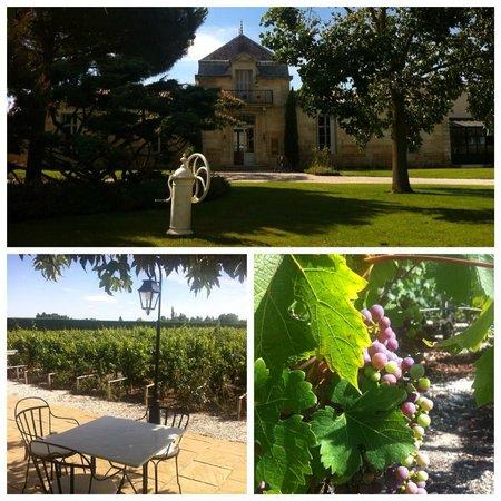 Château Cordeillan-bages : Виноградники и вид ресторана
