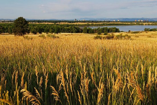 cherry creek state park amber waves of grain