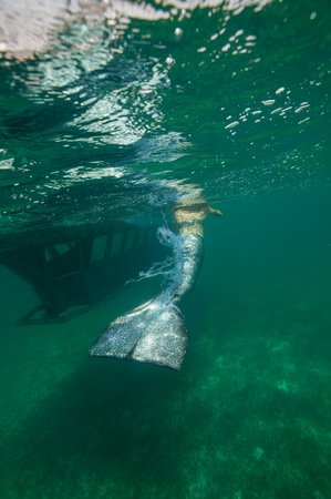 cruising with mermaids Nantucket mermaids' leah collins is your girl for all things nautical on  go to for  half and full day, sunset cruises and long weekends on the.