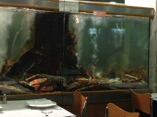 Marisqueira de Alges: Astice e aragoste prima di andare alla griglia!