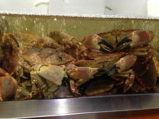Marisqueira de Alges: Granchi giganti