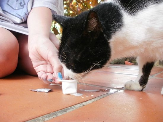 East Winds: Local cat on the premises - 'Thomas'