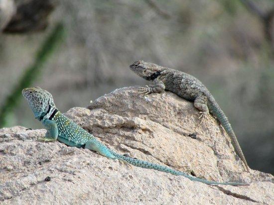 Arizona-Sonora Desert Museum: warm rocks