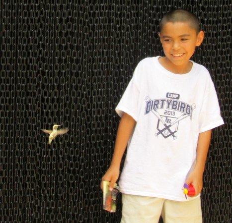 Arizona-Sonora Desert Museum: hummingbird aviary